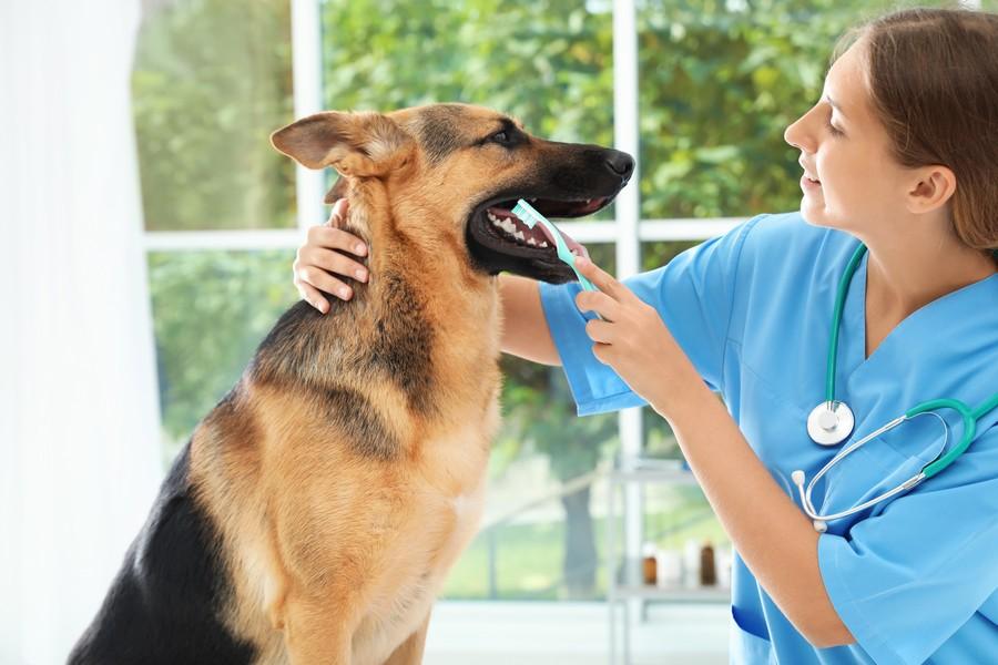 Migliori accessori dedicati all'igiene dentale del cane