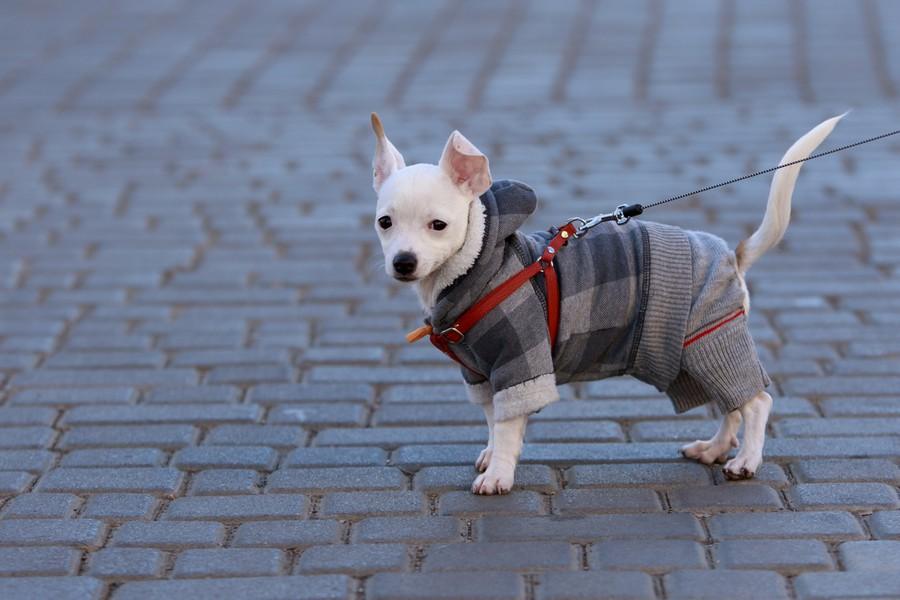 Miglior cappotto per cani