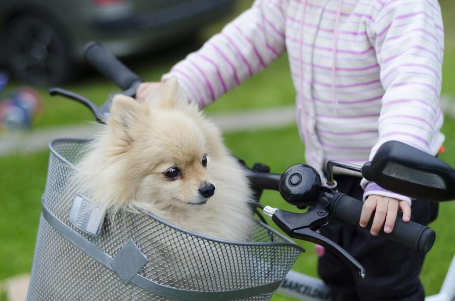 Cesto bici per cane