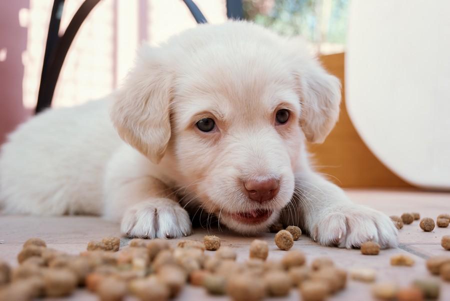Crocchette per cani Acana