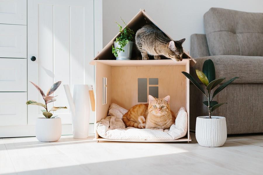 Migliore cuccia per gatto - Recensioni, opinioni e testimonianze