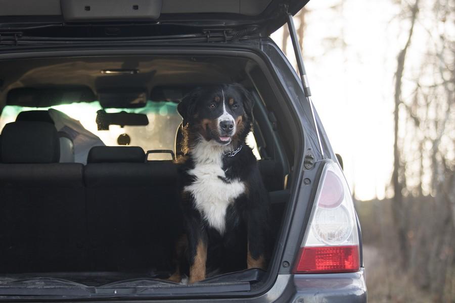 Divisorio auto per cani - Opinioni, prezzi e recensioni dei migliori prodotti