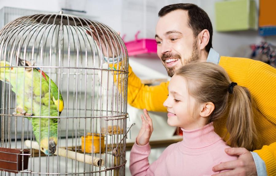 Gabbie e voliere per pappagalli