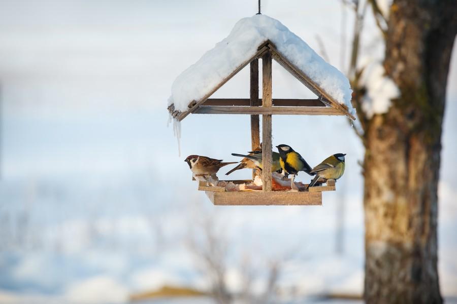 Migliore Mangiatoia per uccelli automatica - Recensione con opinioni e testimonianze