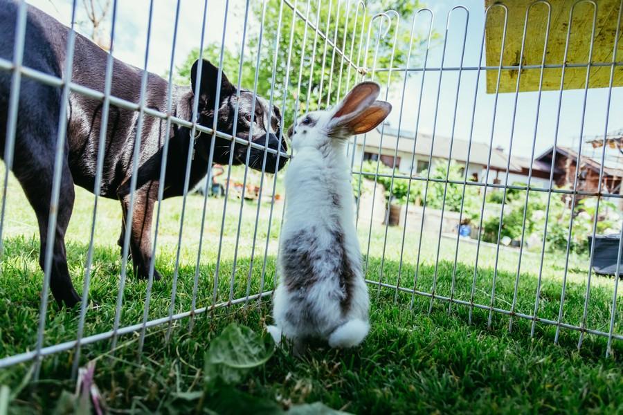 recinto per conigli