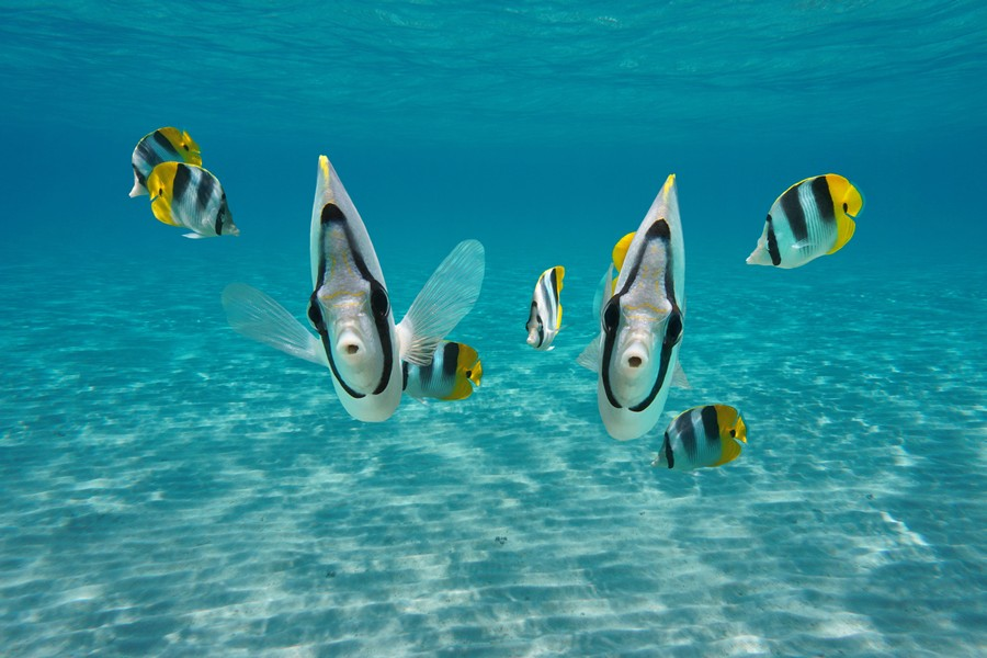 Migliore Fotocamera subacquea