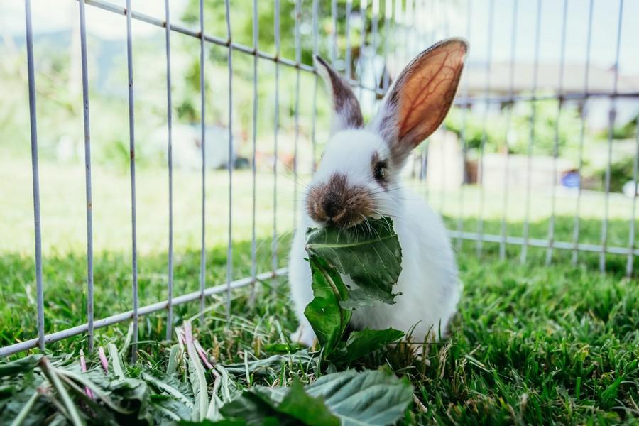 Gabbietta per conigli
