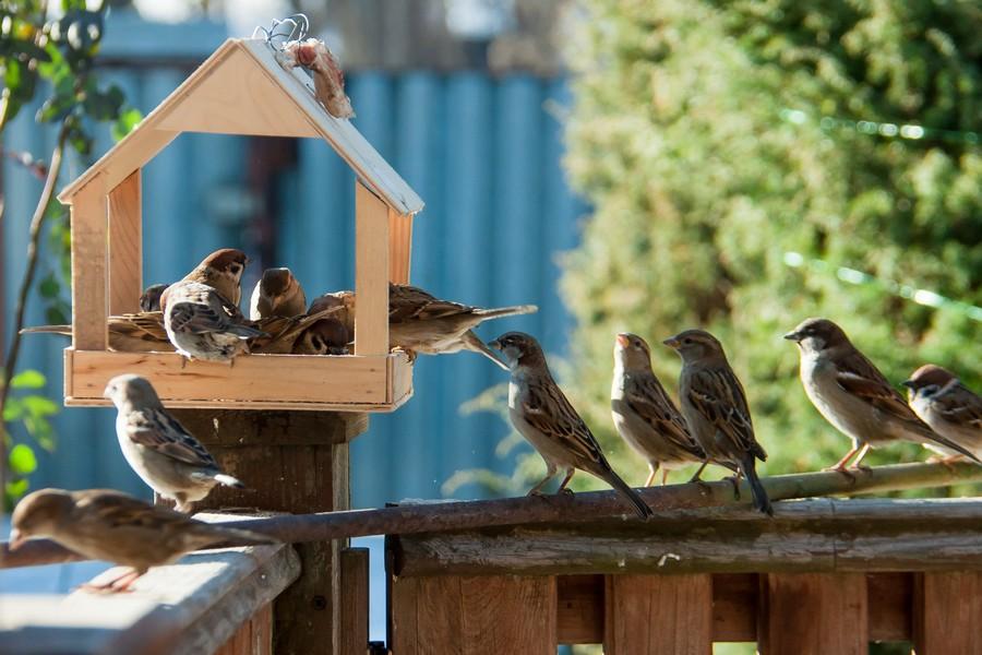 Migliore Mangiatoia per uccelli automatica