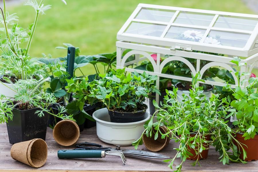 serra per piante migliori modelli con prezzi