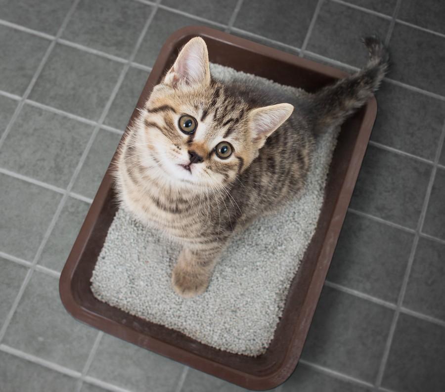 Migliore Toilette per gatti - Recensioni, opinioni e testimonianze